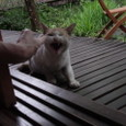 湯布院の猫